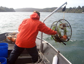 Odfw recreational crab fishing how to crab for Crab fishing oregon