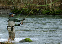 Steelhead fishing on the Clackamas River