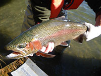 Odfw recreation report northeast zone february 20 for Odfw fish stocking