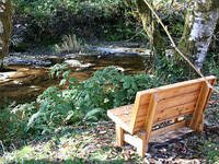 Bench on Fall Creek