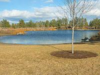 Pine Nursery Park Pond