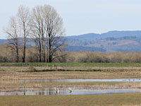 Sauvie Island Wildlife Area