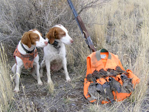 Bird hunting dogs