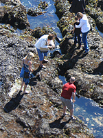 Tide-pooling at Yaquina