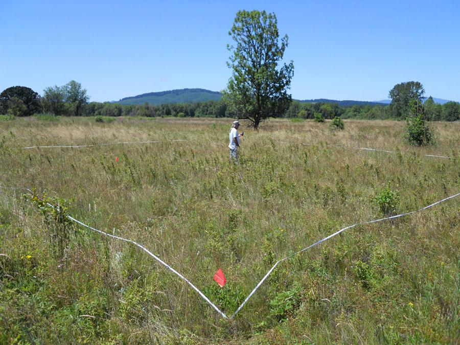 Meadowlark habitat