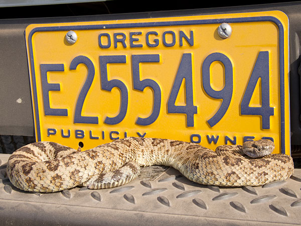 Odfw conservation strategy news for Oregon fishing license price