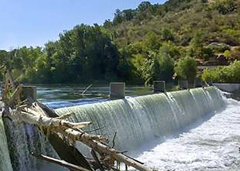 Gold ray dam fish counts odfw for Dam fish count
