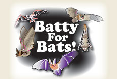 Batty for Bats!