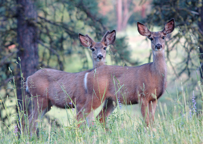 ODFW Photo Gallery - Wildlife Areas
