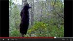 Rogue District Bear Bait