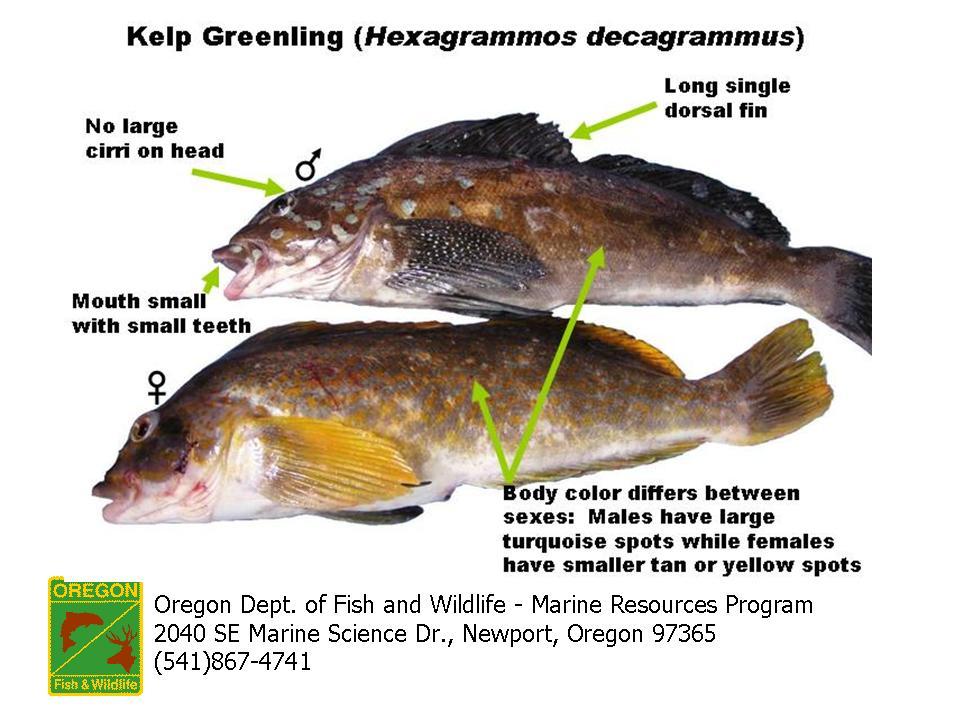 18 Gramm [Size S - Fish] 7CuX5p4