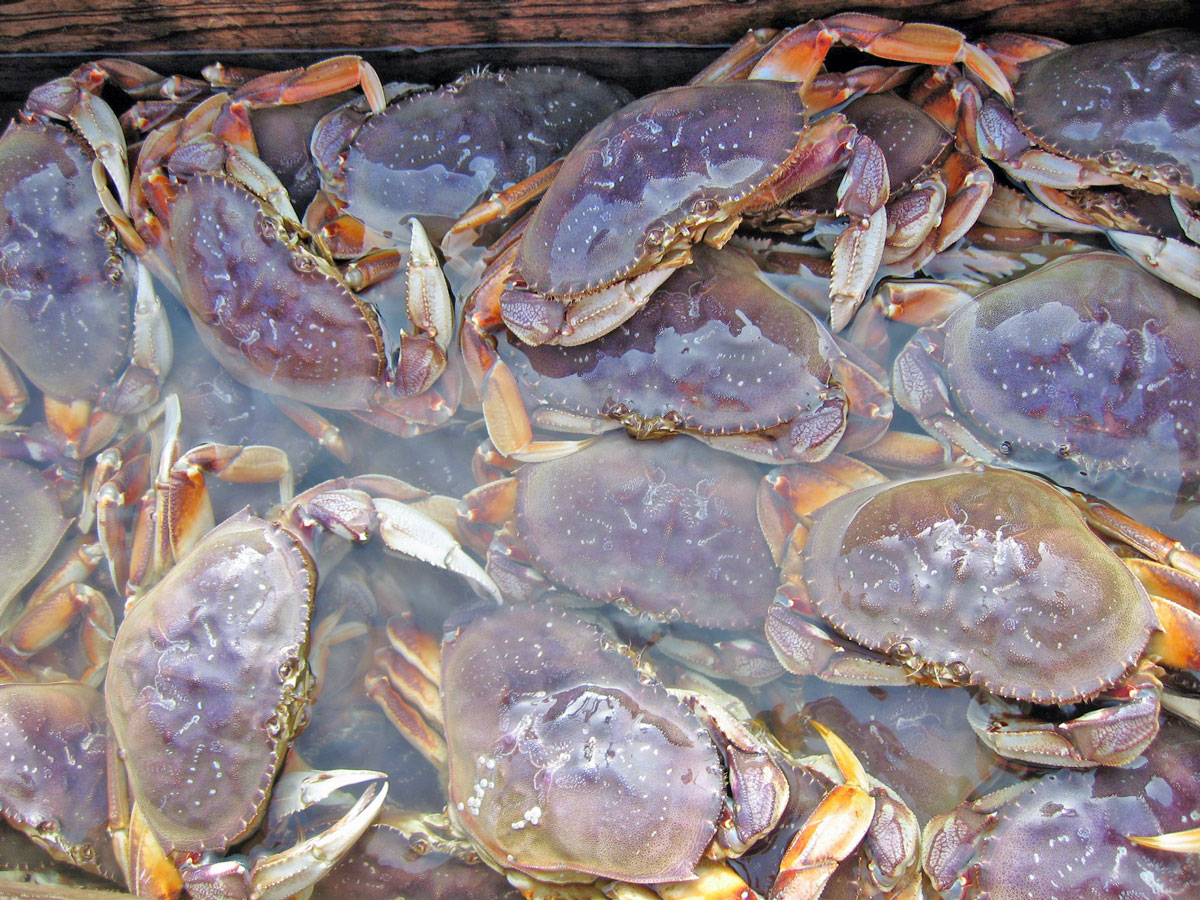 ODFW Commercial Crab Fishing