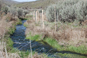 Hay Creek habitat restoration