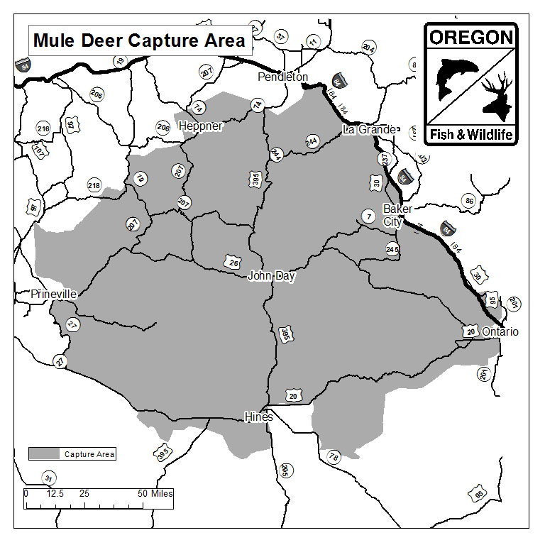 Mule Deer Capture Area
