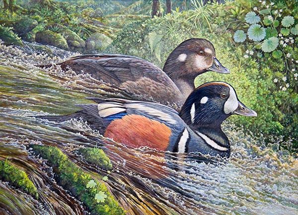ODFW 2015 Waterfowl Stamp Art Contest - photo#9